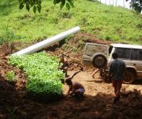 Plantando Teca 2005